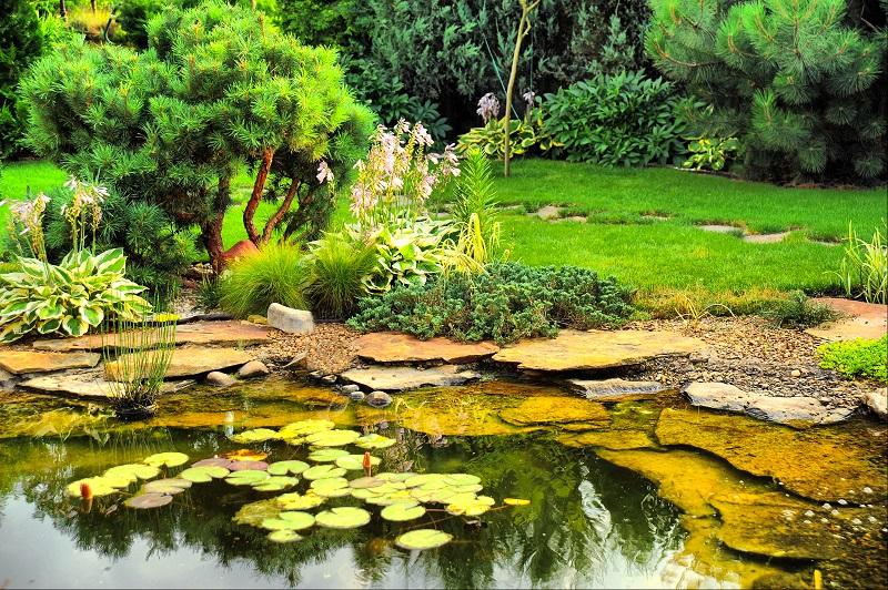 אסי חסון - נופים ירוקים